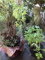 dead_plants