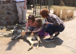 Just petting a kangaroo